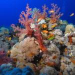 Ambiance sous marine