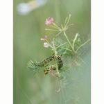 Proxi - macro insectes